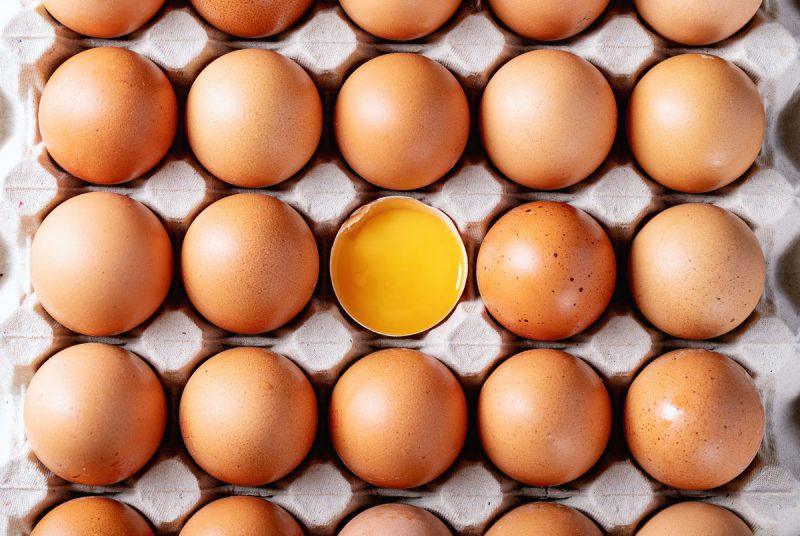 egg basics
