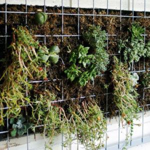 succulent vertical wall garden diy