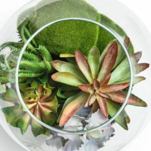terrarium basics